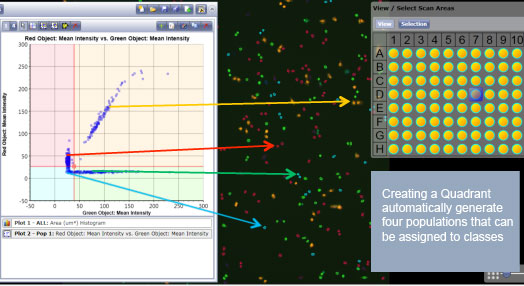 Correlation of gated scatter plot data to counted cells on acquired images